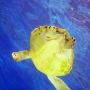 Turtle Underwater Photography - Key Largo, FL.jpg