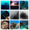 Sea Experience Dive and Snorkel Excursions