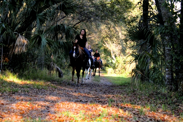 Horseback  Group Riding in South Florida