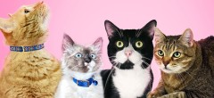Celebrate Caturdays in November at the Humane Society of Broward County