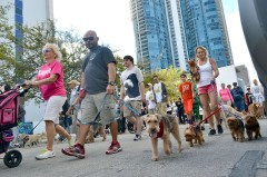 28th Annual Walk for the Animals