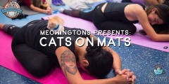 cats on mat