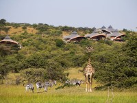 Sir Richard Branson's luxury tented safari camp, Mahali Mzuri, located in Kenya's Olare Motorogi Conservancy.