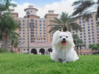 White dog in front of a hotel